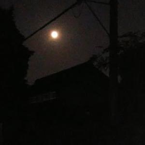 中秋の名月( ^ω^ )