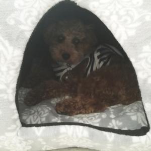 また犬ベッド( ̄▽ ̄)♡
