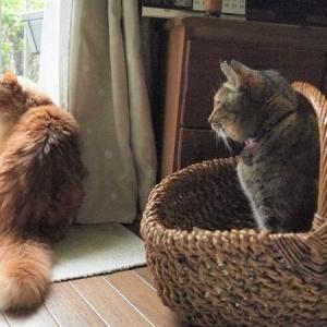 猫は人間4倍の速さで年をとってしまうから悲しい