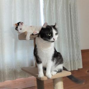 お外に出ない猫は家の中の世界が全てで、頼れるのは飼い主だけ