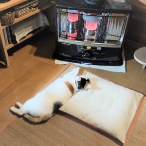 石油ストーブは猫をダメにするらしい…