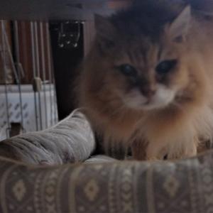 愛猫の介護のさなか、実は車の事故に遭ってました…
