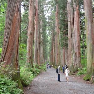 戸隠神社へ②奥社への道は普通に山歩き、神がかった戸隠巡りでした