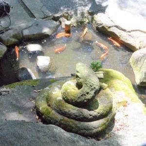 白ヘビパワーでお金の厄落とし 熱海の来宮神社②
