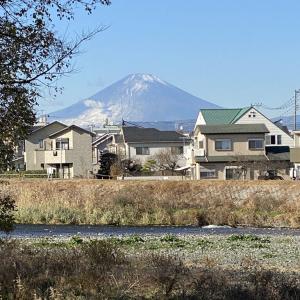 12月20日 富士とこなつの散歩!