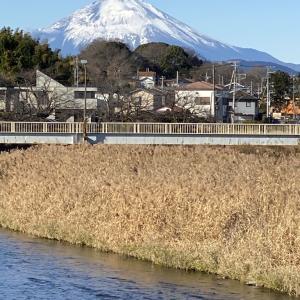 1月1日 新春の富士!
