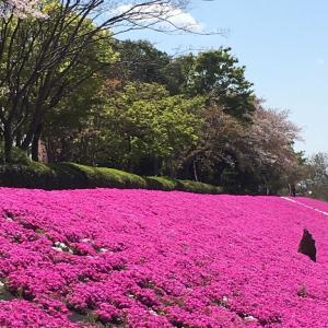 春の花 2019年!