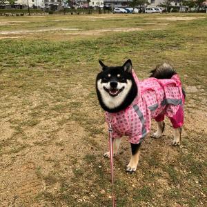 かっぱで散歩