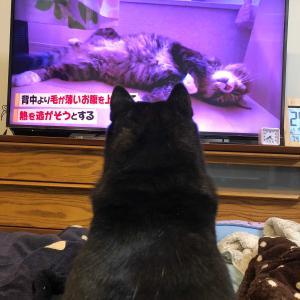 テレビを見るももちゃん