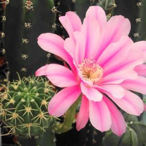 目を引く派手な花