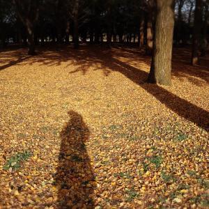 紅葉 明治神宮と代々木公園