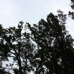 【お散歩】目黒自然教育園