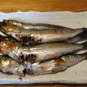 【旨魚料理】イワシの丸干し