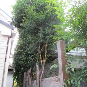 【ぼやき】植栽選定とウッドフェンス作り替え