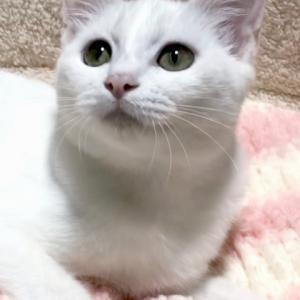 9月29日(日)名古屋市港区 譲渡会参加猫 紹介