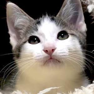10月20日(日) 名古屋市動物愛護センター譲渡会 参加猫 紹介