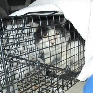 婆ちゃんちに来る猫 2