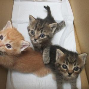 愛護センターから子猫3匹