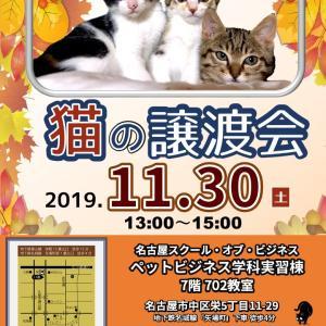 11月30日(土) 名古屋市中区栄 名古屋市動物愛護センター主催 譲渡会 参加猫紹介
