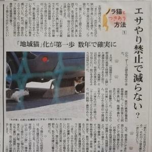 のら猫のフン尿被害で迷惑してたから ~朝日新聞連載記事~