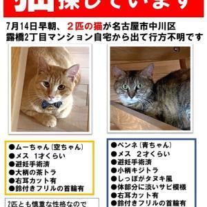 【拡散希望】迷子猫2匹探しています!