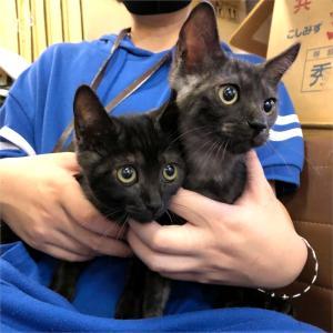 週末は名古屋市守山区で猫の譲渡会!