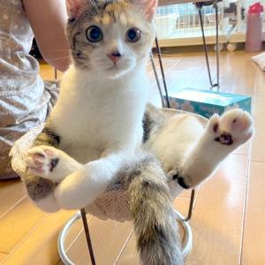 9月6日(日) 名古屋市港区 譲渡会 参加猫紹介