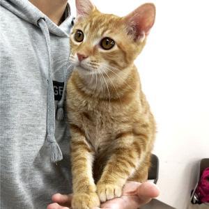 ◆予約制◆9月27日(日) 名古屋市守山区 譲渡会 参加猫紹介