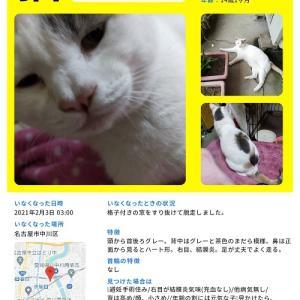 中川区で迷子猫探しています
