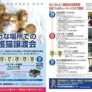 8月24日(土)名古屋市北区譲渡会 参加猫の紹介