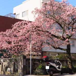 熱海桜と芦ノ湖ツー(2021.2.7)