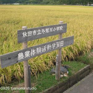 09/26 秋田市 山王十字路 竿燈大通り 周辺小路