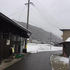 雪です!!  つもってます!  けど生きてます!!