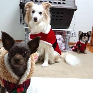 みなさんのお家では クリスマスプレゼント交換しますか?
