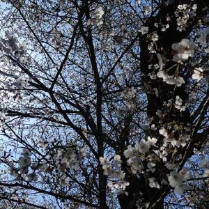 今週の星模様☆(2020年3月29日~4月4日)知識を磨いてスキルアップ