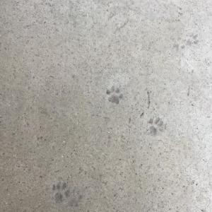きれいな足跡