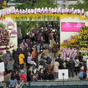 2019.2.22 蜻蛉19-1 世界らん展 東京ドーム  Dragonfly 19-1 2019 World Orchid Exhibition Tokyo Dome