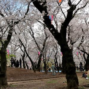 2019.4.1 2019.4.3 蜻蛉19-11 王子散策 dragonfly 19-11  Ouji  walk