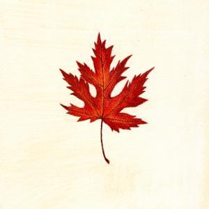 落ち葉のすごいところ
