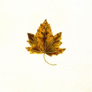 落ち葉を見て