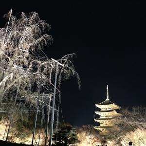京都東寺のライトアップ