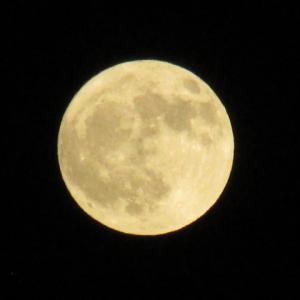 満月 「国民祝祭」「祝賀御列の儀」から「大嘗祭」の合間に満ちる月