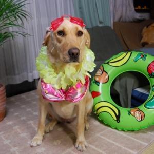 もしも、愛犬♀が水着姿になったなら~!