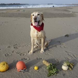 渚にて On The Beach
