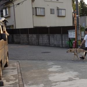家庭犬と盲導犬