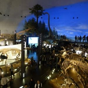 福井県立恐竜博物館と犬の股関節