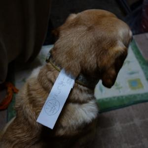 愛犬に関する申し送りはコレ!(^^)v
