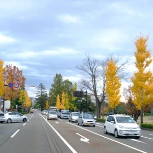 イチョウ(銀杏)の黄色がきれいな時季!