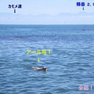 富山湾で泳ぐ!!!