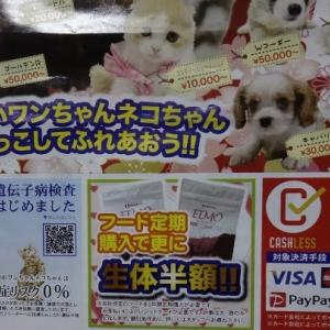 犬やネコは商品!?